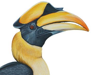 giant hornbill artwork by Jane Kim