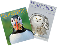 Enjoy the Living Bird digital version