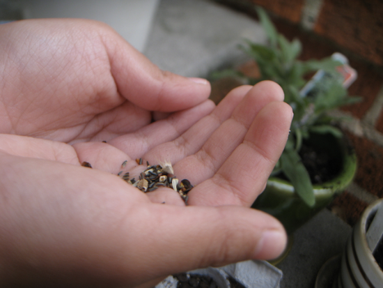 Picture of hand holding seeds