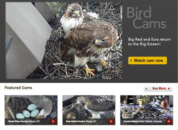The new Bird Cams home page