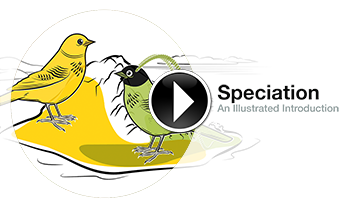 Animated explanation of speciation in the birds-of-paradise