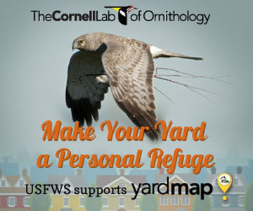 Make your yard a refuge