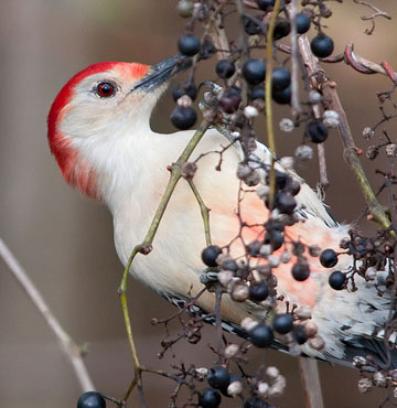Learn which plants attract which birds