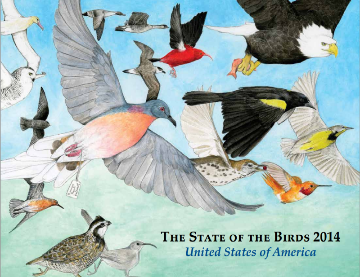 State of the Birds Report