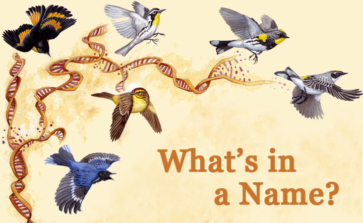 What's in a Name? Or genome? Illustration by Virginia Greene