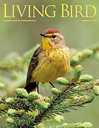 living bird summer 2015 cover