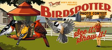 BirdSpotter contest returns this FeederWatch season