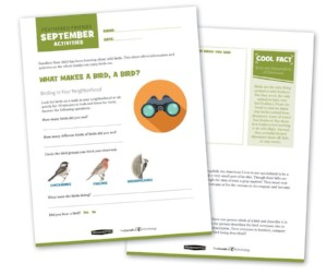 pages from Feathered Friends curriculum
