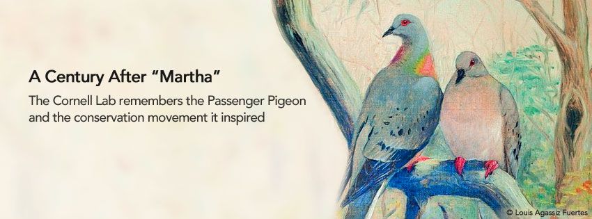 100 years after extinction of passenger pigeons