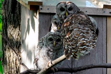 Wynken, Blynken, Nod, and an adult perch outside the box