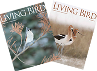 Receive our award-winning quarterly member magazine, Living Bird, when you join.