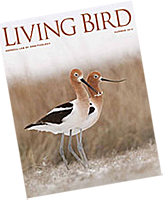Join now to receive the Summer 2013 issue of Living Bird