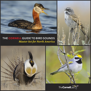 The Master Set features 4,938 sounds from 735 North American Birds