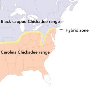 map of chickadee hybrid zone