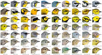 The Warbler Guide - quick finder detail