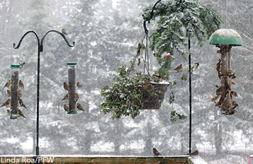 Evergreen holiday wreaths can double as winter shelter for birds.