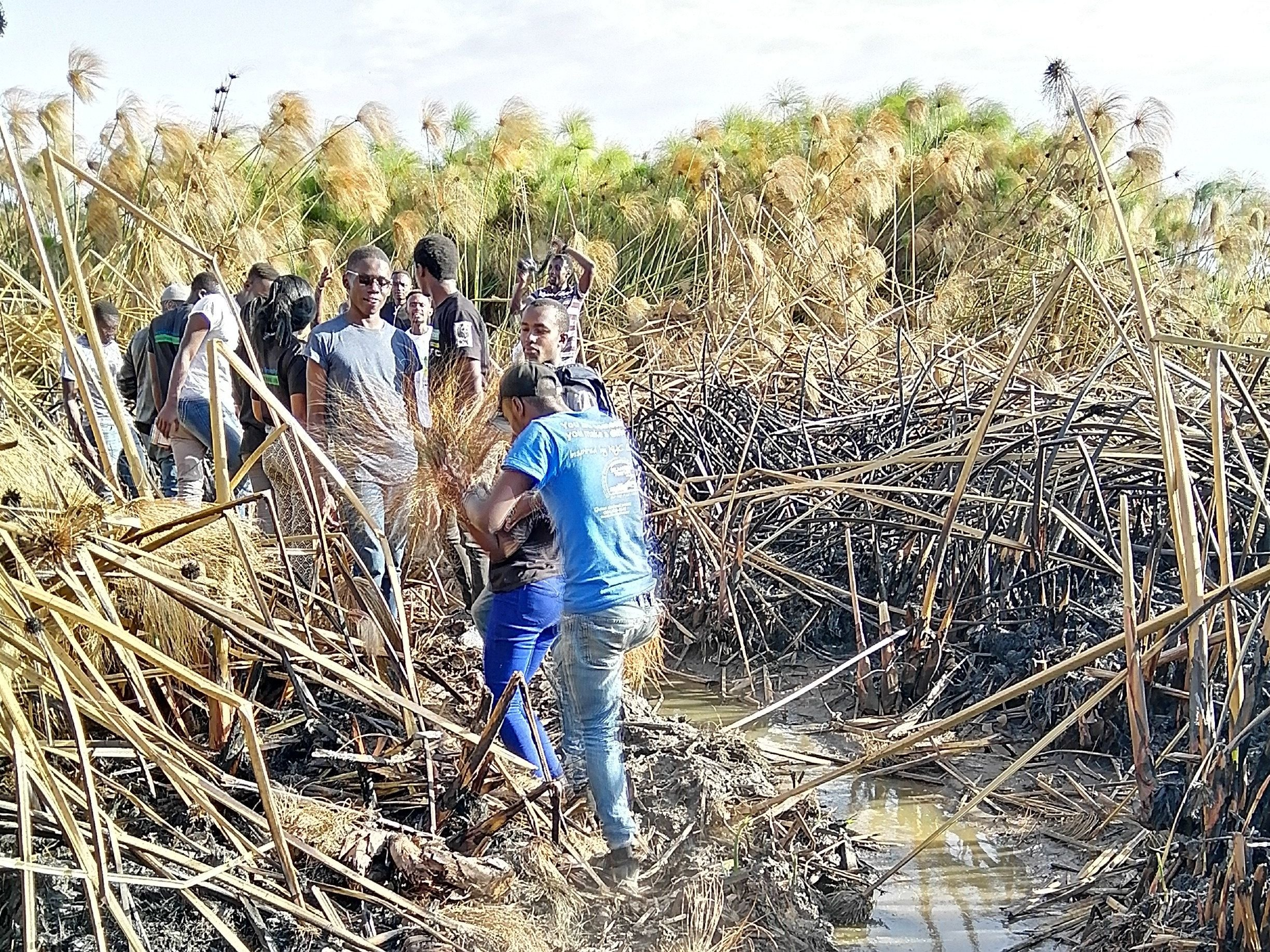Community group working on the wetlands