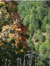 herfst in de Svaneti-regio in Georgië