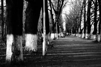 Maria Zvereva: Puistossa (Minun Karjalani-valokuvakilpailun satoa)