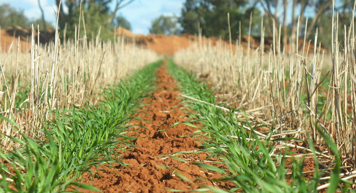 Is organic no-till a possibility?