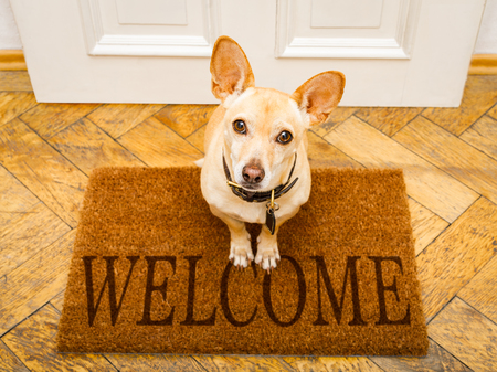 Small dog on a welcome mat looking up at you.
