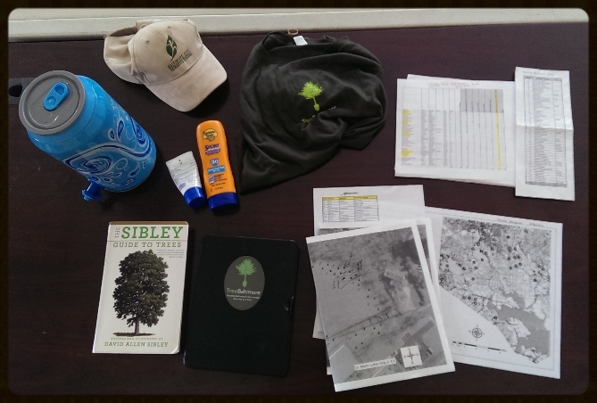 Tree mapping kit.