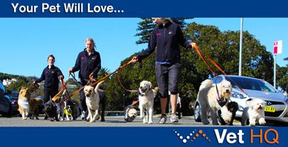 Your Pet Will Love... Vet HQ