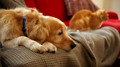 How do I tell if my pet is in pain?