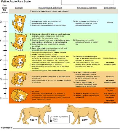 Feline Acute Pain Scale