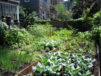 A garden that feeds