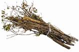 Tree Branch Pick Up