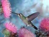 Birds in your back yard