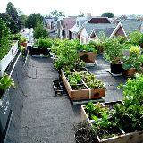 Green Rooftpos