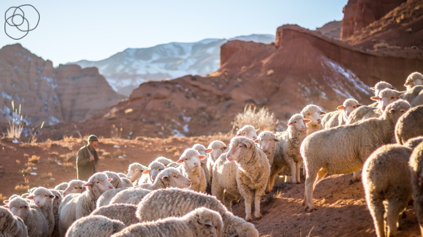 Sheep on dusty mountainside with their shepherd