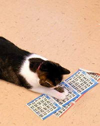 PAWS Bingo in April