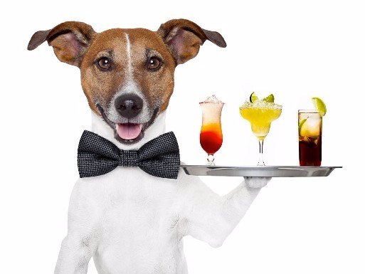 PAWS For Cocktails - Feb 8