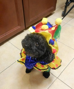 Dog ready for birthday party