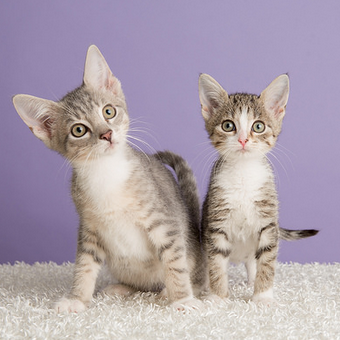 Kittens at PAWS