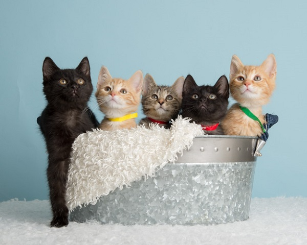 Civil War Kittens