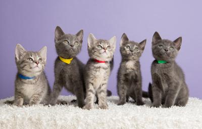 A League of Their Own Kittens