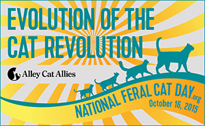 National Feral Cat Day Event at PAWS
