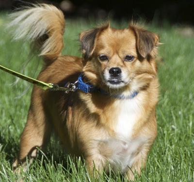 Volunteer dog walkers needed at PAWS