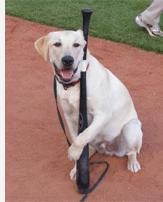 Dog with a baseball bat