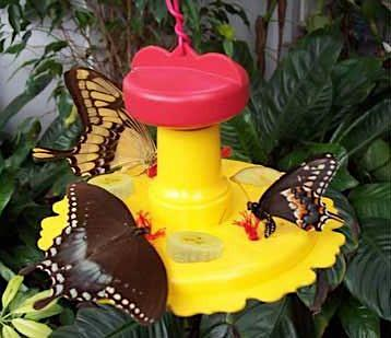 Butterfly Feeder for Fruit and Nectar