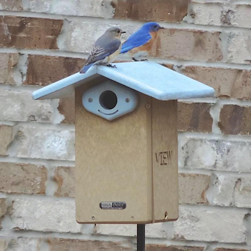 Recycled Plastic Bluebird House