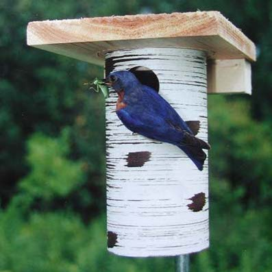 Gilbertson Nest Box