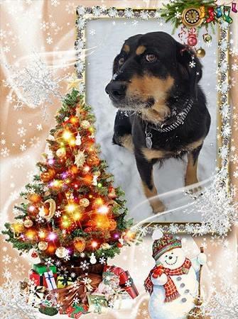 Happy Holidays, from Saving Sadie!