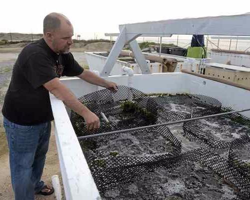 CSU Collaboration to Strengthen California Aquaculture