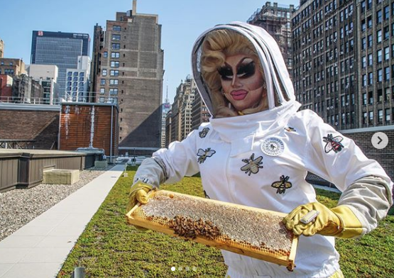 screenshot of FIT Instagram photo of Trixie Mattel holding tray of bees from our beehive