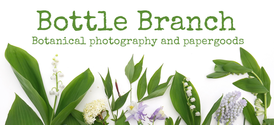 Bottle Branch Botanical Photography and papergoods
